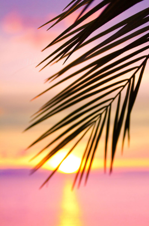 gypsybeachqueen:  sunset in paradise