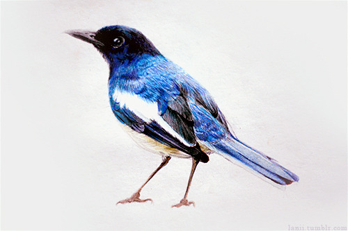 fat-birds:  Lani does incredible things with colored pencils.