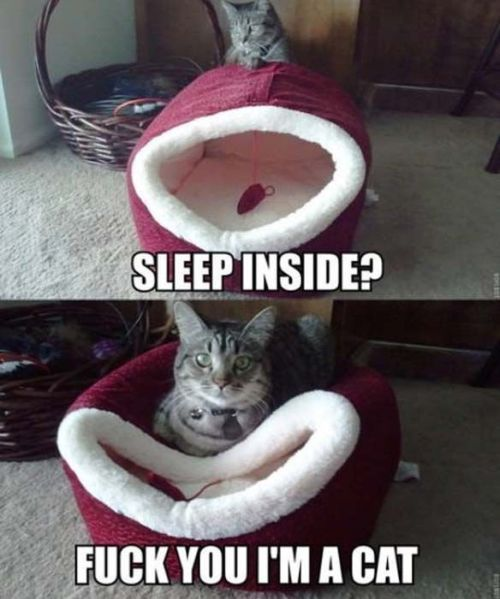 catasters:  Cuz sleep inside is too mainstream…(via cat-saturday-0)