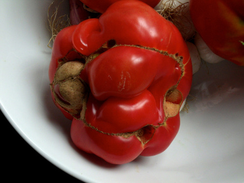 Local Organic Tomato.  This tomato is a beautiful example of organicness and diversity in nature.  This is nature. We are nature. We eat organic foods to protect our bodies and the environment from pesticides. Pesticides hurt our organism and destroy natural ecosystem.