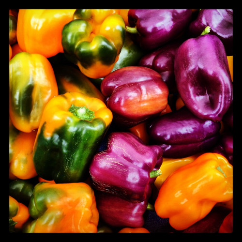 Beautiful peppers — Ferry Building Farmers' Market