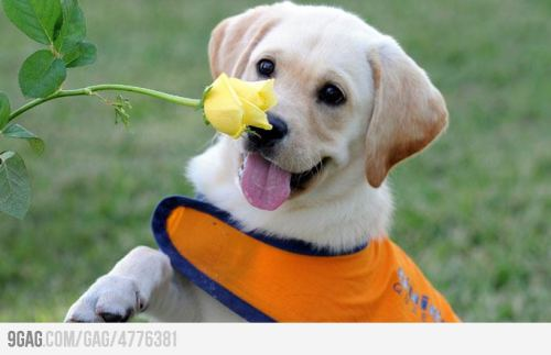I know it's monday, so here's a puppy enjoying this flower and all its splendid floral glory.