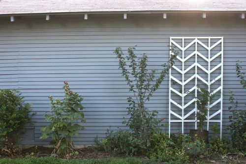 DIY Chevron Trellis. Scrap wood makes us happy. - Team Forrage