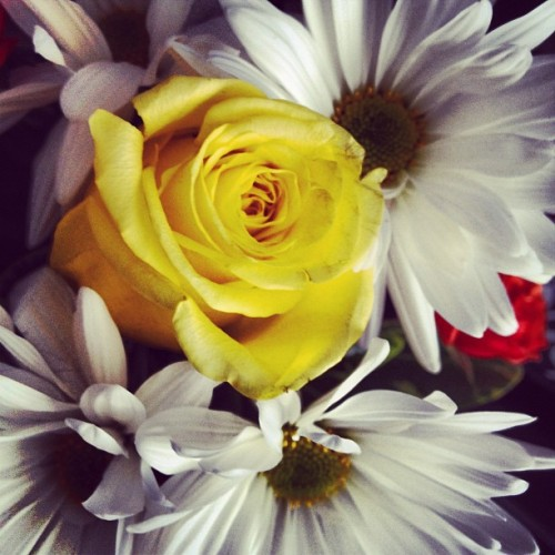 Flowers from the boyfriend:)  (Taken with Instagram)