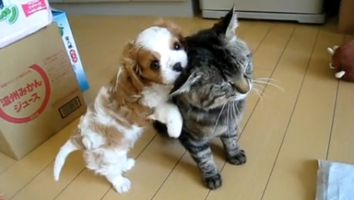 10 of the cutest puppy videos on YouTubeCat videos may dominate the Internet, but these precious pooches prove that canines can be just as adorable.