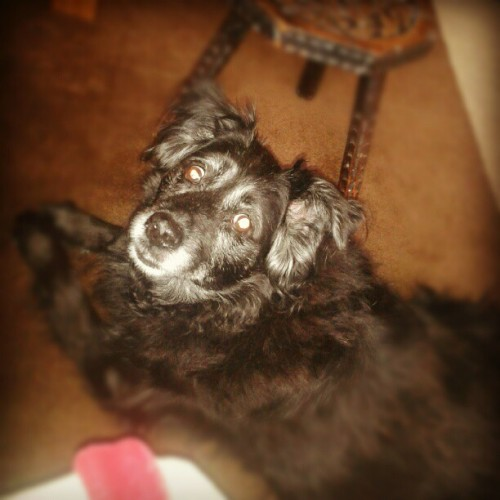 She has been exceptionally cute today :) (Taken with Instagram)