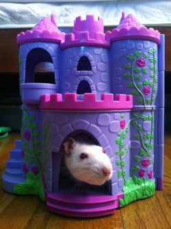 This is not my rat or my picture, but dear lord do i love it. :D