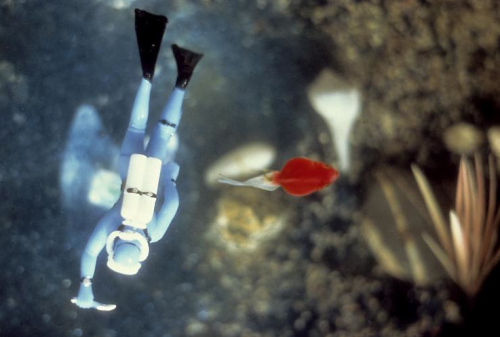 thesuperserious:  Diver, Red Fish By Laurie Simmons