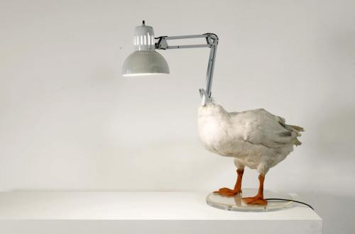 A duck lamp. Right. From Sebastian Errazuriz.