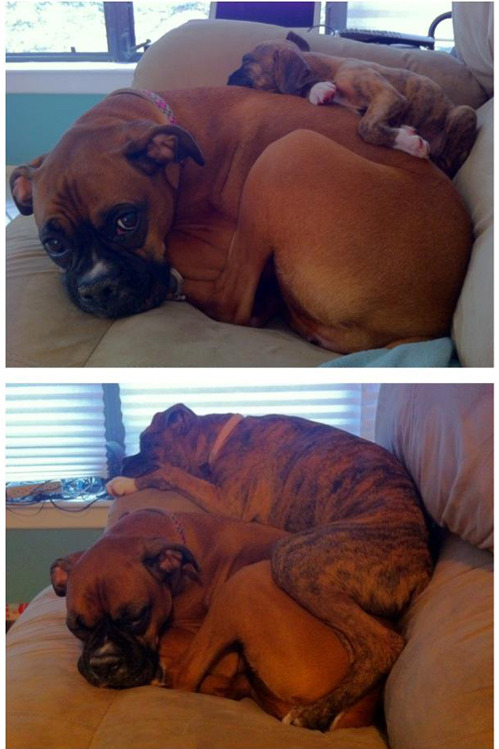 tastefullyoffensive:  Then & Now[via]  D'awww