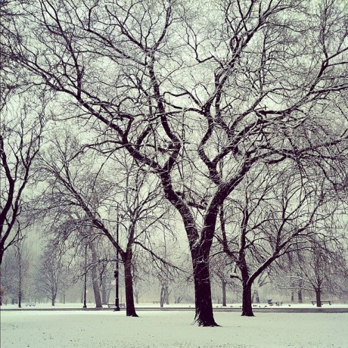 snow (Taken with Instagram)