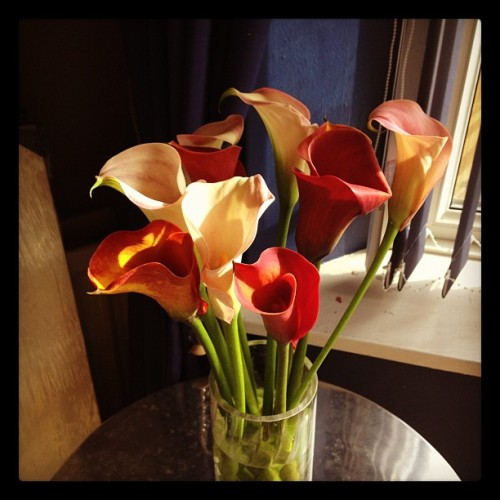 Morning flower! Calla lillies… (Taken with Instagram)