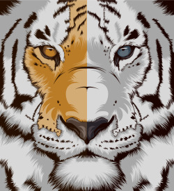 "craniodsgn:  I just posted ""Tiger"" CranioDsgn  (Spain) on sale at Society6  My favorite animal of all"
