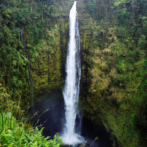 thesedaydreamsagain:  Akaka Falls by tyler hayward on Flickr.