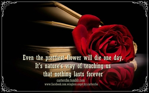 Even the prettiest flower will die one day. It's nature's way of teaching us that nothing lasts forever