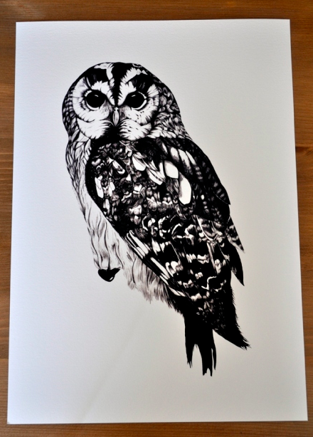 #Owl illustration by Ella Johnston.