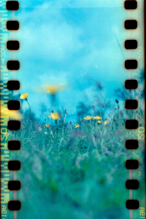 Film Photography Submission By: Jeroen ( JT ) Flowers. Made with a Seagull 4B TLR on expired Fuji Provia 400.  Made by fotograph.nl!