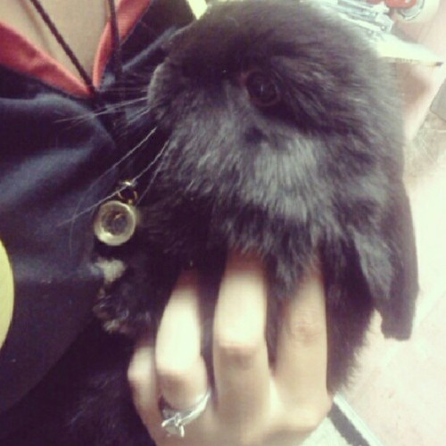 In LOVE with this #bunny  (Taken with Instagram)