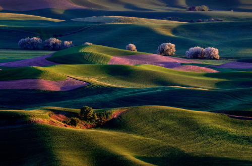 heracliteanfire:  Sunrise on Palouse Hills: The sun's first rays warm the rolling hills of the Palouse Country in Eastern Washington. (© Randall Roberts/National Geographic Traveler Photo Contest) (via National Geographic Traveler Photo Contest 2012 - In Focus - The Atlantic)