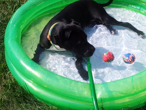 It was so hot yesterday (102°) So to stay cool off I layed in my pool all day!