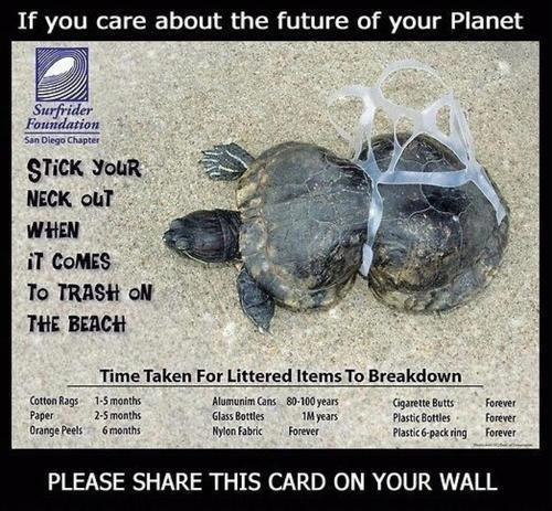 animalgazing:  Keep our beaches clean! From Surfrider Foundation