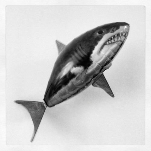 @whizhouse brought in a remote controlled shark!!! (Taken with Instagram at ALLDAYEVERYDAY)