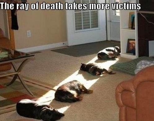 the-absolute-funniest-posts:  Death Ray