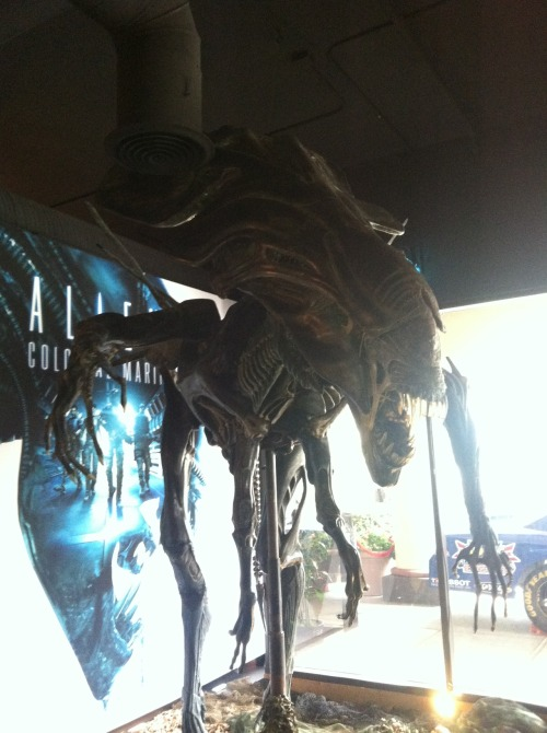 tylerferrari submitted:  This is a picture I took of the Queen Alien prop they had on display at the SEGA demo booth for the, Aliens: Colonial Marines, video game at Comic Con in San Diego.   This is pretty fantastic
