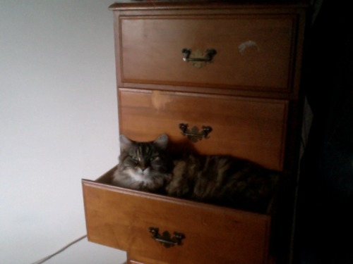 get out of there cat. that is a drawer for storage not a kitty crib.