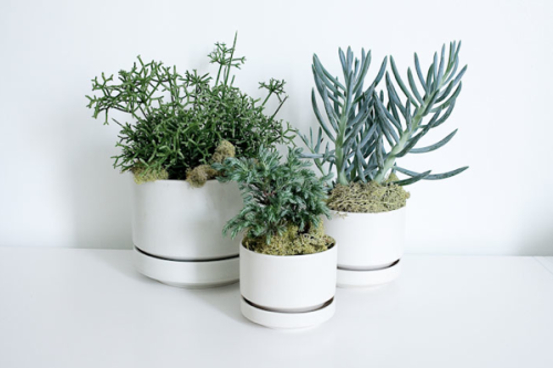 Things That Rock Our World: Succulents. All Day, Everyday