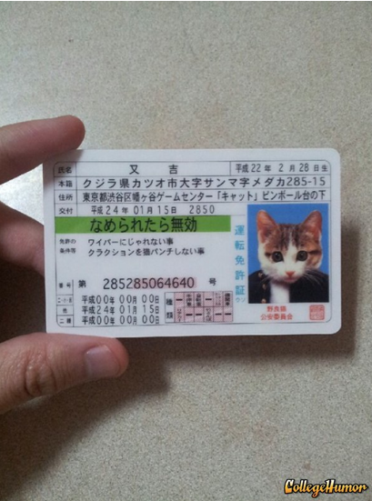 collegehumor:  Cat ID Card Dude, I'm telling you this is the best fake ID money can buy. That looks just like you.  My Cat Is Famous In China.
