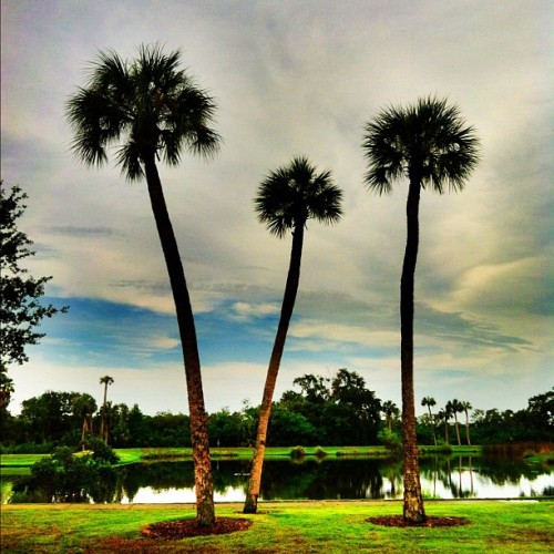 #palmtree #sky #pond #nature #iphone #iphonesia #iphoneonly #ikonic  (Taken with Instagram at Cooper Bayou Park)