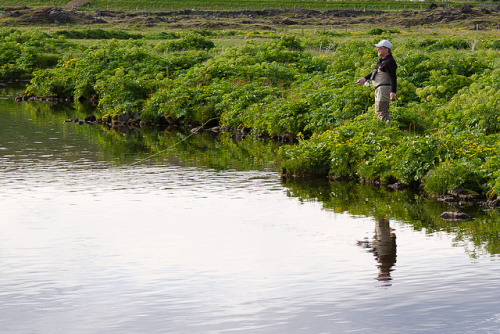 Went fishing with my dad recently. The river is Laxá in Aðaldalur, Iceland. Mostly trout but a small chance of salmon as well. Very, very, very beautiful scenery. Nature and surrounding farmlife at its best.