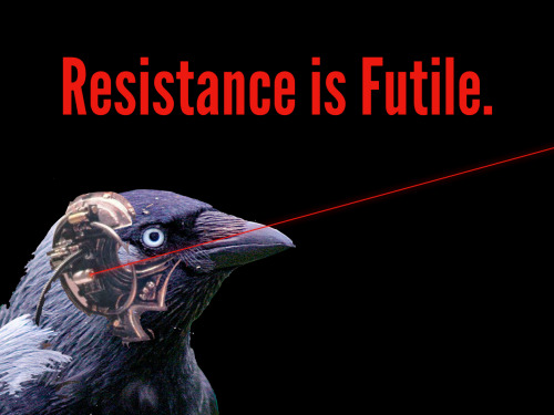 "capnmariam:  ""Crows are a borg."""
