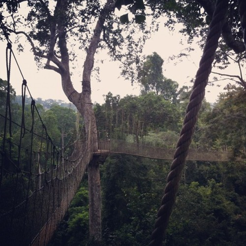Kakum rope bridge (Taken with Instagram)
