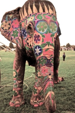 Gorgeous Elephant colorfull painted for the Rajasthan Elephant festival in Jaipur, India the night for Holi Phagwa