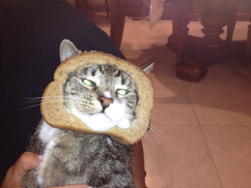 Breaded Fifi-Foo gave so much laughter and the cat did not mind at all.  So all you haters, don't hate!  After a death in the family everyone needed this much needed gift.  And that's all there is to it.
