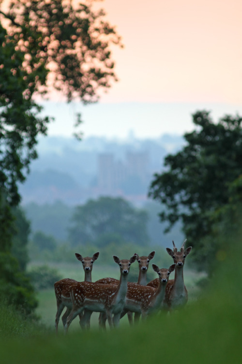 "magicalnaturetour:   ""Dawn Fallows"" by Simon Roy:)"