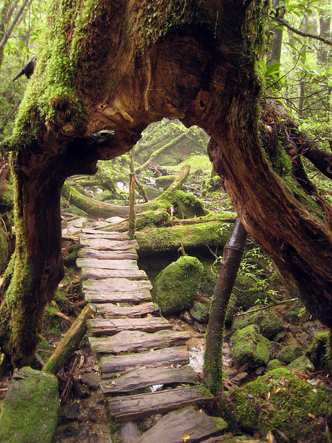 visitheworld:  Beautiful primeval forest at Shiratani Unsuikyo Ravine, Yakushima, Japan (by JoshBerglund19). ]]>