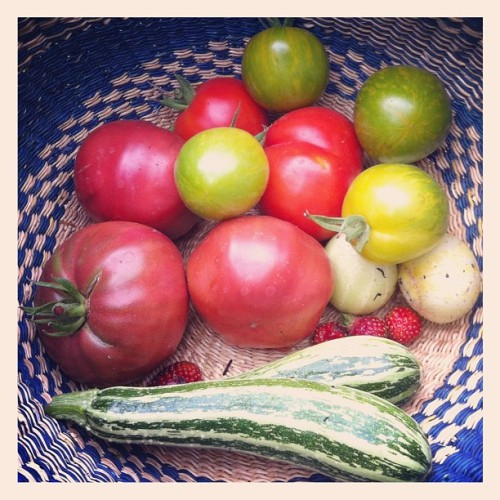 Harvest from my yard share  (Taken with Instagram)