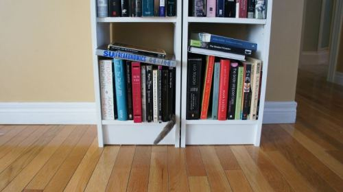 getoutoftherecat:  i spy a tail. and books definitely do not have tails.