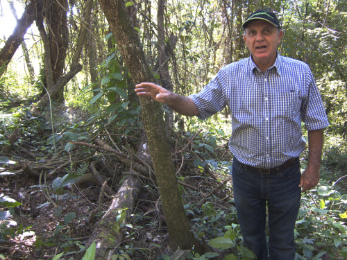 Jão, who has neighboring farm, is the consigliere of Fazenda Ambiental Fortaleza. Jão is a coffee whisperer who started to explore passive organic farming in 1990. His philosophy is that less land should be under cultivation, and the land that is cultivated should be a part of the natural environment: coffee should be grown in this forest. Yields should be drastically reduced and quality should be dramatically improved. Grow less coffee, grow better coffee.