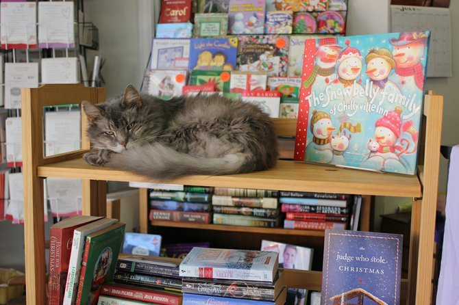 This beautiful cat is offered for $25,000. The perk is, it comes with a book store. If I had 25 k, I'd jump on this. (via Photo | Fulton Sun)