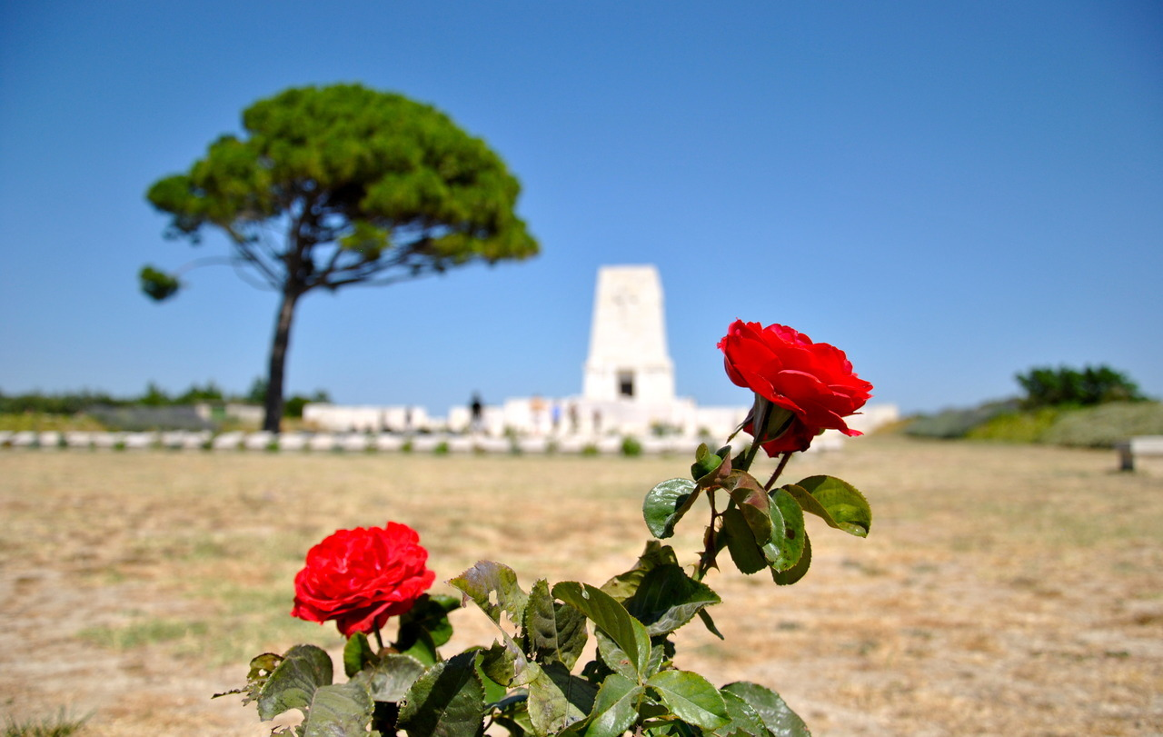 libertarianvagabond:  Lone PineGallipoli, Turkey         (19 July 2012)   The First World War was insanely stupid. Gallipoli was insanely stupid. One military historian (John Keegan) estimates that the Turks had 300,000 men killed, wounded, or missing in this madness.  The Allies managed 265,000 killed, wounded, or missing. Insanity. - RH