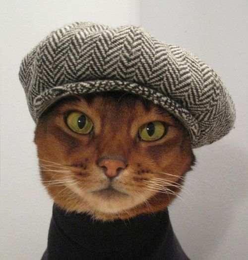 Beatnik kitty.