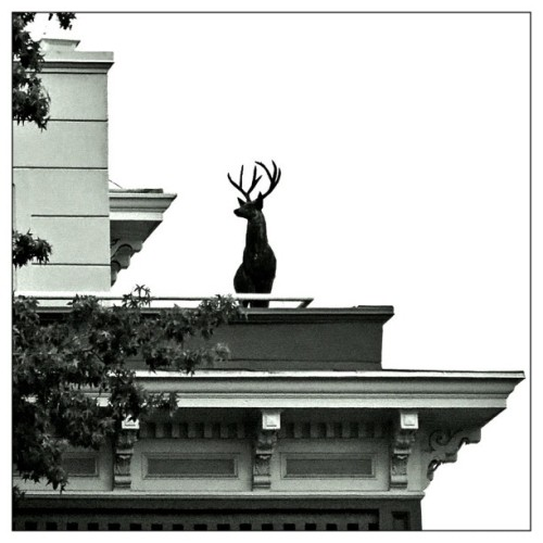 yourvillage:  Only in Portland  put an elk on it