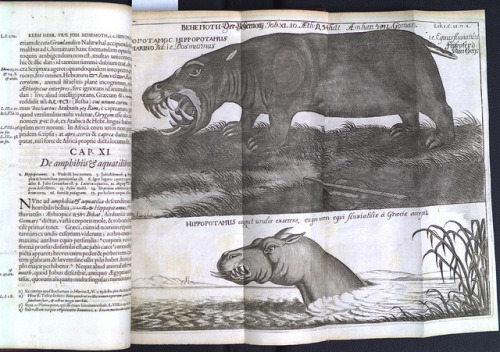 Hippopotamus by Library & Archives @ Royal Ontario Museum on Flickr.