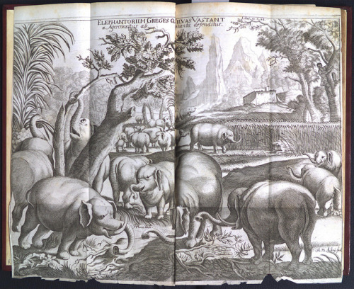 Elephantorum Greges Qui Silvas Vastant by Library & Archives @ Royal Ontario Museum on Flickr.