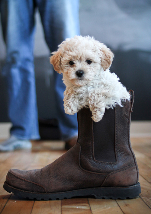 Pepe in Boot