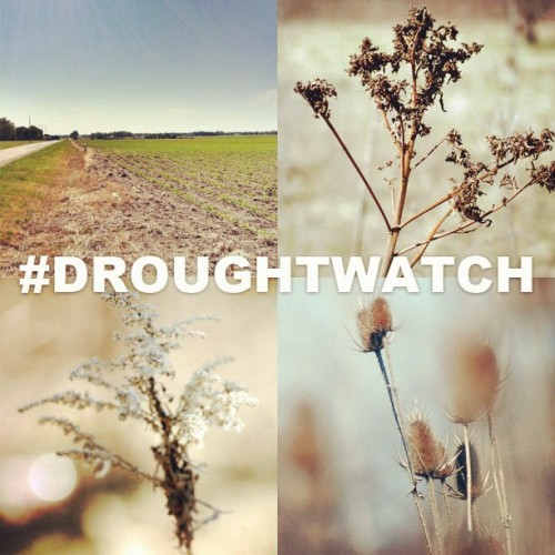 NBC News Hashtag Collection: #DroughtWatch This summer started with extremely high temperatures and the US has been hit with what forecasters are calling the most widespread drought since 1956. Share with us how the drought is affecting your area this weekend with the tag #DroughtWatch. We'll feature some of your photos Monday on @Instagram and nbcnews.tumblr.com.